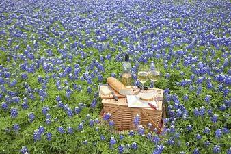 Wine Picnic Amongst Texas Bluebonnets