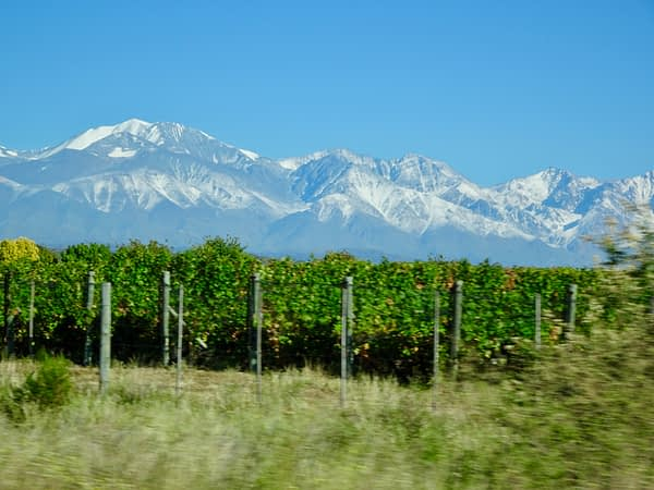 Vineyard and Andes Mountains, Uco Valley, Mendoza, Argentina