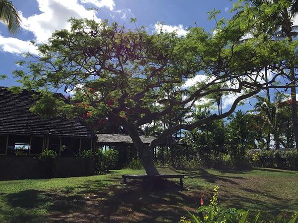 Grounds, Tanoa International Hotel, Nadi, Viti Levu, Fiji