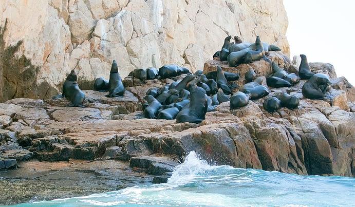 Beach with Sealife, Cabo San Lucas, Mexico