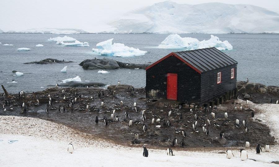 Hut and Gentoo Penguin Colony, Port Lockroy, Antarctica